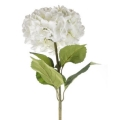 Rental store for White Hydrangea Bloom  silk flower, over in Tulsa OK