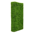 Rental store for Boxwood Backdrop Wall  4 x8 x14 in Tulsa OK
